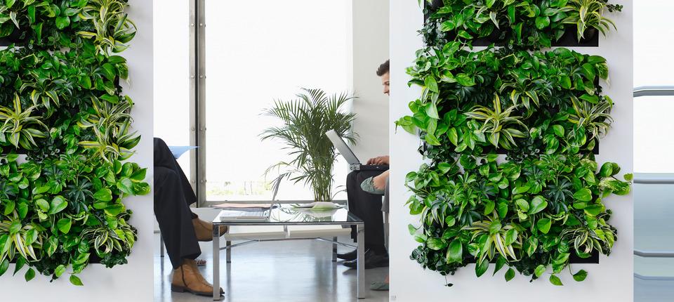Zo komen de planten op kantoor de winter door